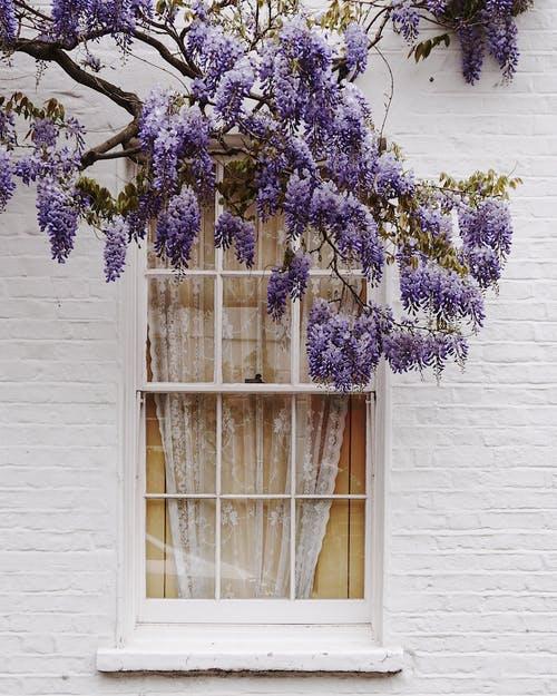 Jardinage : Lavande ou Ail d'ornement ?